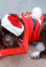 Las Vegas Great Santa Run to Host Pet Costume Contest for Virtual Participants