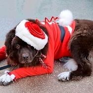 Las Vegas Great Santa Run to Host Pet Costume Contest for Virtual Participants