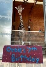 Celebrate Ozzie the Painting Giraffe's 7th Birthday at Lion Habitat Ranch