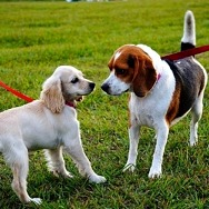 """Henderson Schedules Bark in the Park """"Paw-pup"""" Events"""