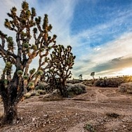 Nevada Outdoor Business Coalition Launches Virtual Panel Discussion Series, April 22, 2021
