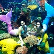 Mermaid Swims and Interactive Stingray Feedings Return to Silverton Casino Hotel's Aquarium in June