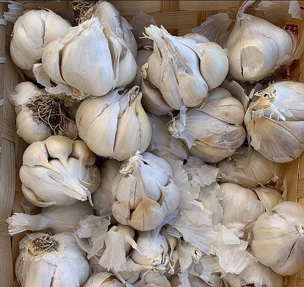 Spice Things Up at the Garlic Lovers' Festival at the fresh52 Inspirada Market June 24