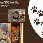World Lion Day at Lion Habitat Ranch August 7
