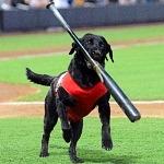 FINN The Bat Dog Returns to Las Vegas Aviators Professional Baseball team and Las Vegas Ballpark!