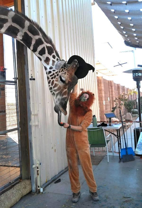 Ozzie the Giraffe